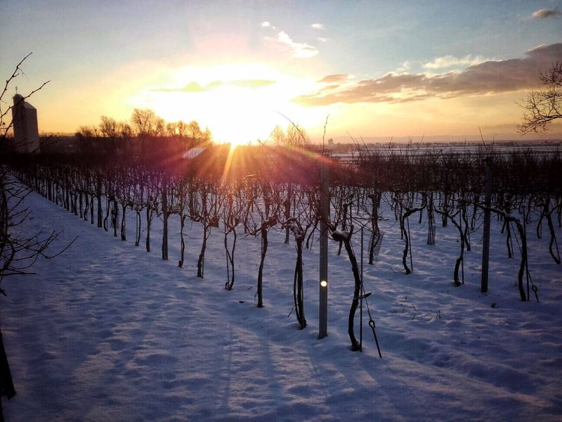 tl_files/weblab/Homepage/Bilder/sonnenaufgang-winter.jpg